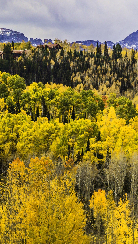 Fondos de pantalla Pinos en bosque durante otoño en Colorado Vertical