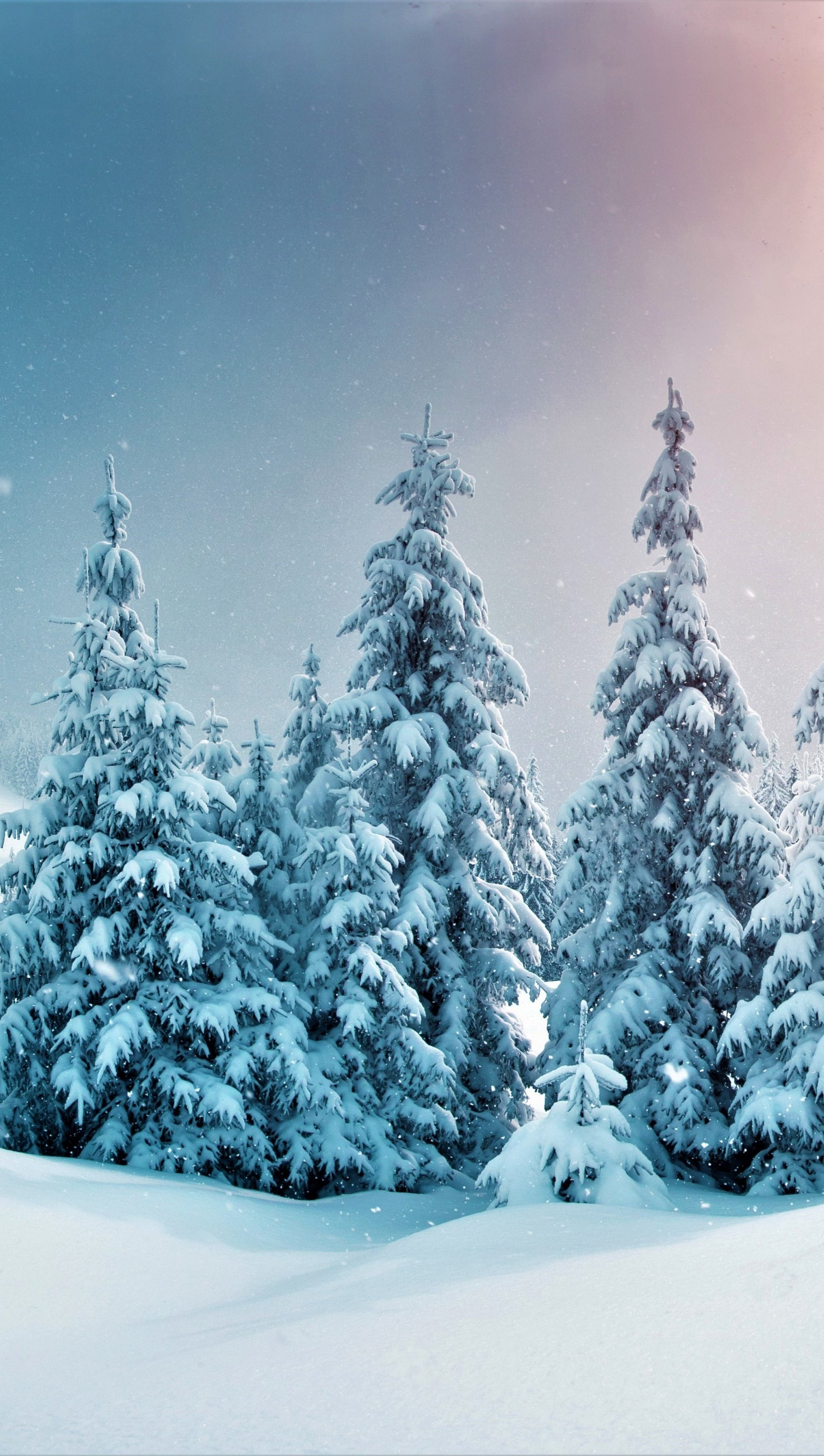 Wallpaper Pine trees in snowy forest Vertical