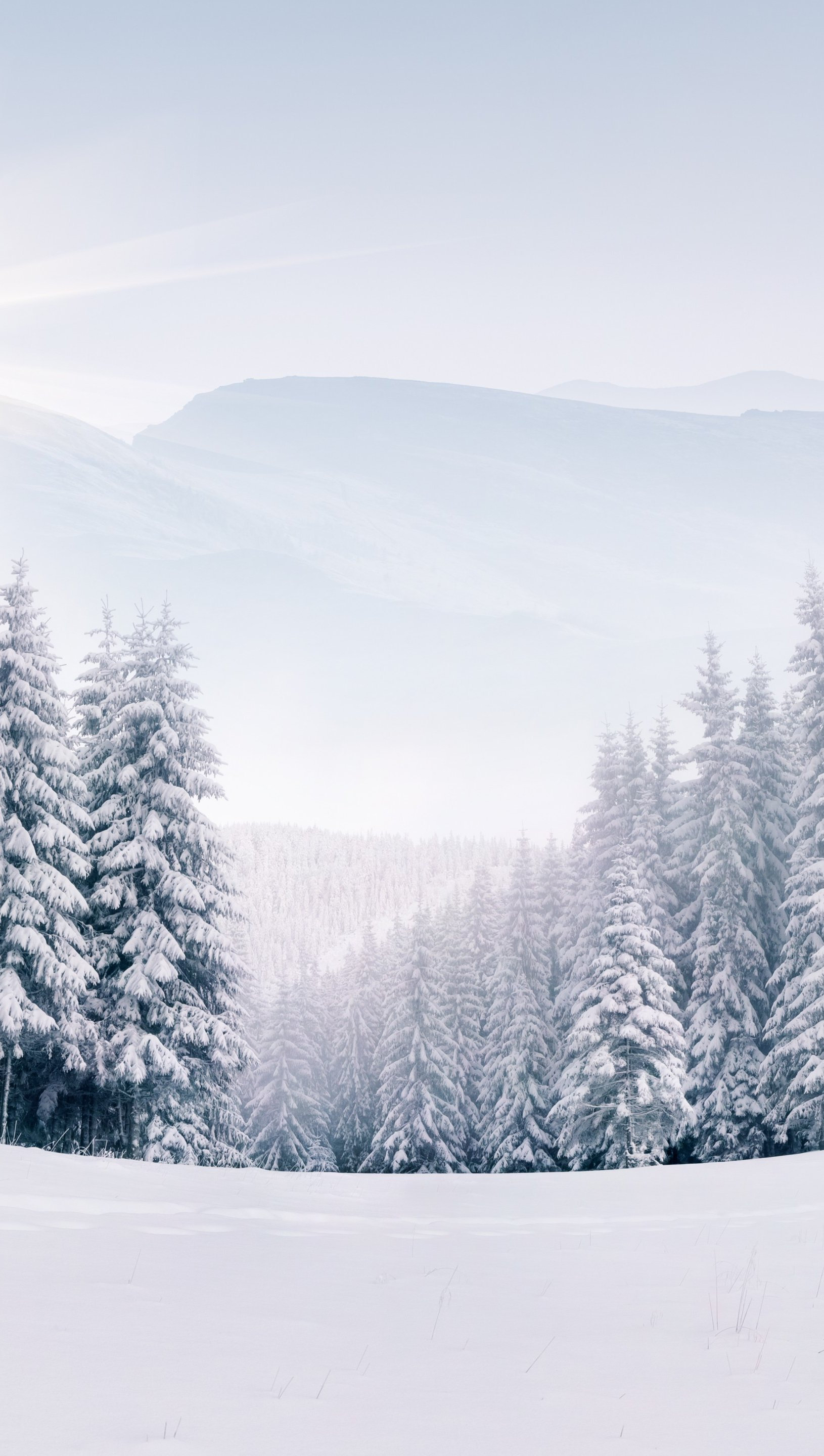 Wallpaper Pine trees in snowy forest in winter Vertical