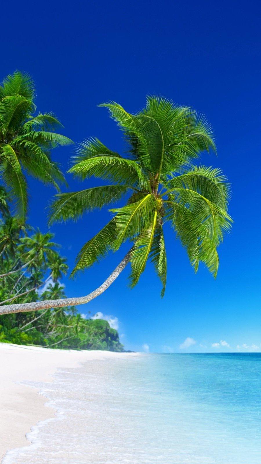 Fondos de pantalla Playa tropical Vertical