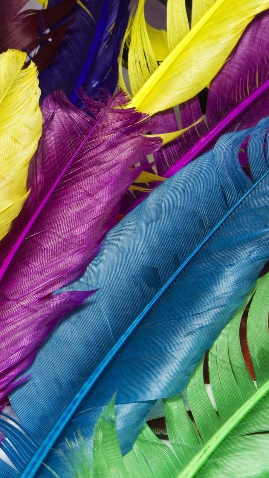 Wallpaper Colourful feathers Vertical