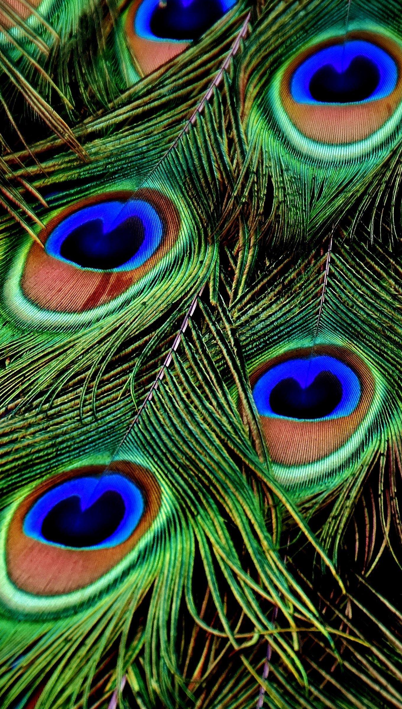 Fondos de pantalla Plumas de pavo real Vertical