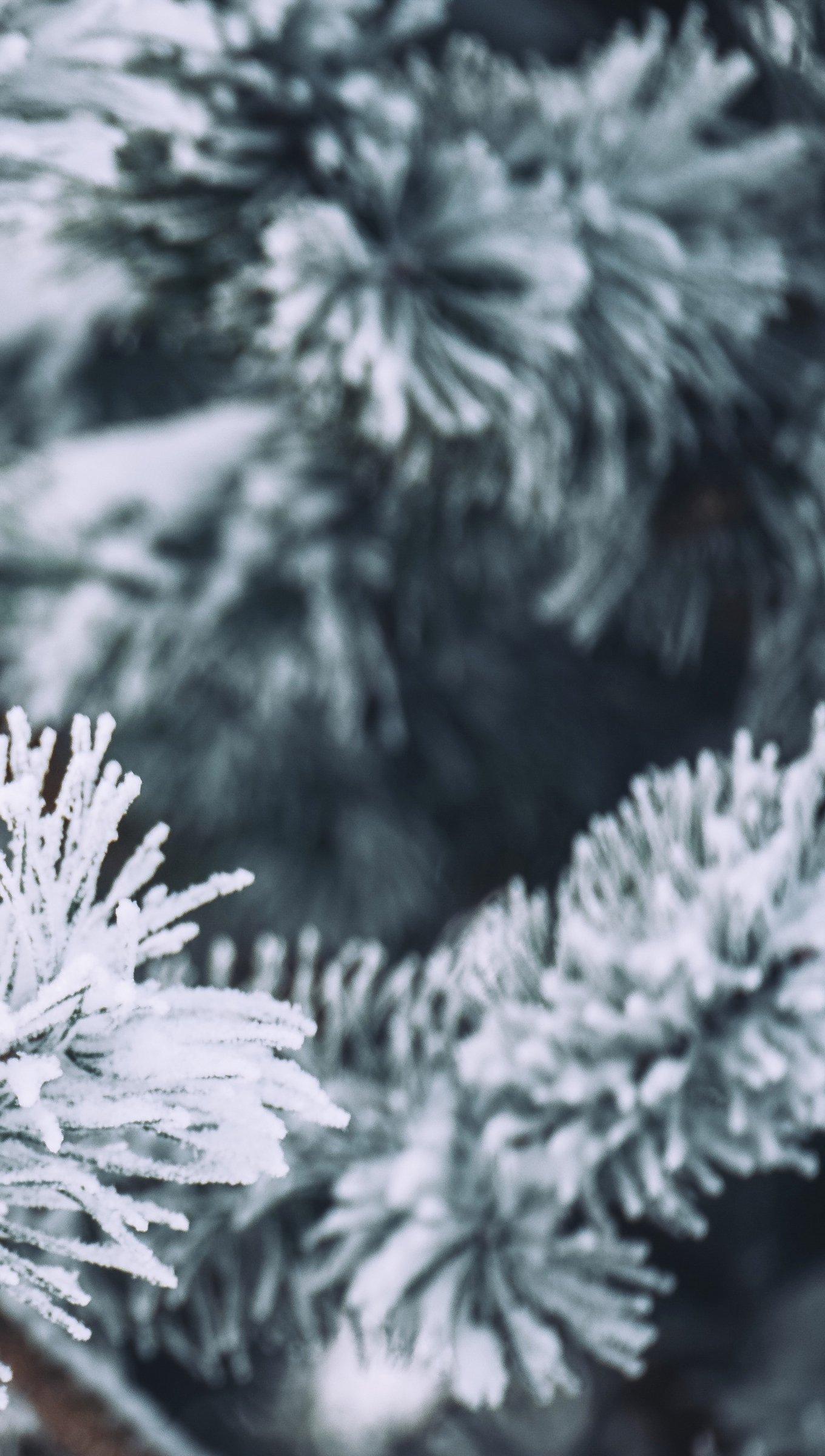 Fondos de pantalla Rama de un pino con nieve Vertical