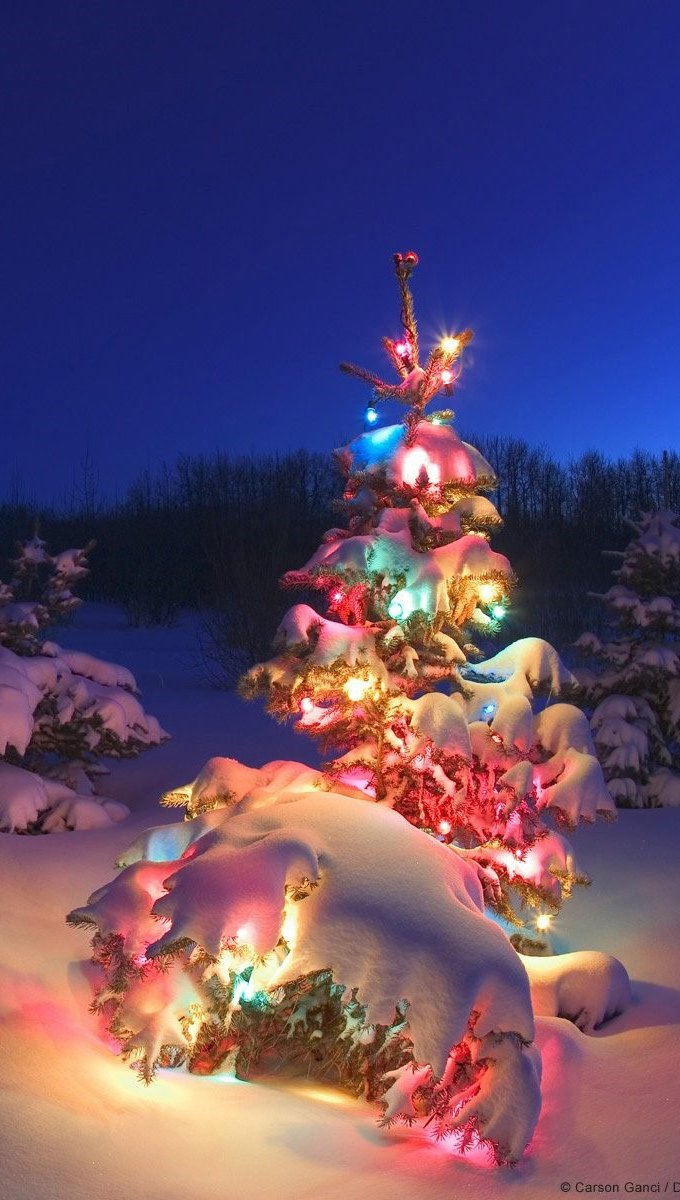 Wallpaper Christmas tree with lights at the North Pole Vertical