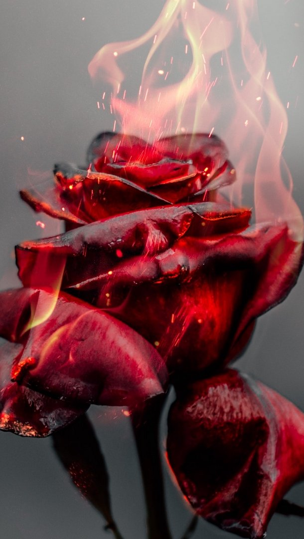 Wallpaper Rose in fire Vertical