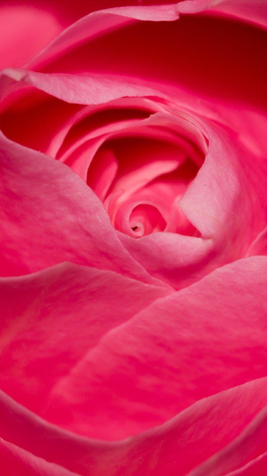 Fondos de pantalla Rosa perfecta Vertical