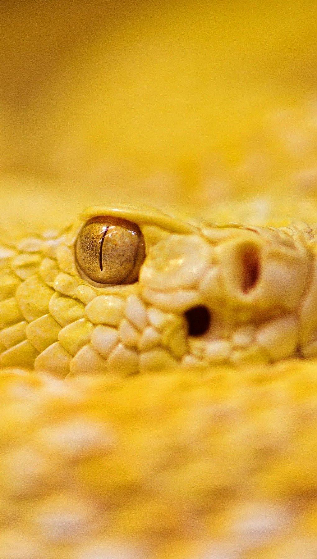 Fondos de pantalla Serpiente de cascabel de Albino Vertical