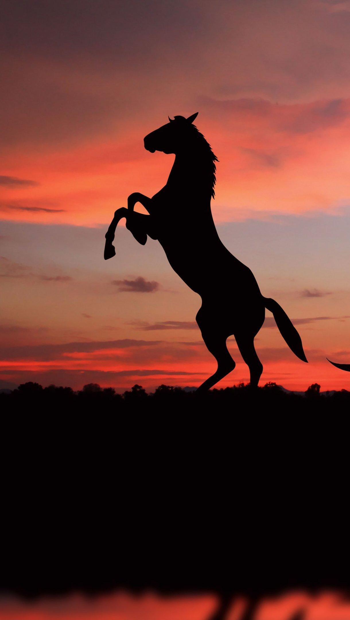 Fondos de pantalla Siluetas de caballos al atardecer Vertical