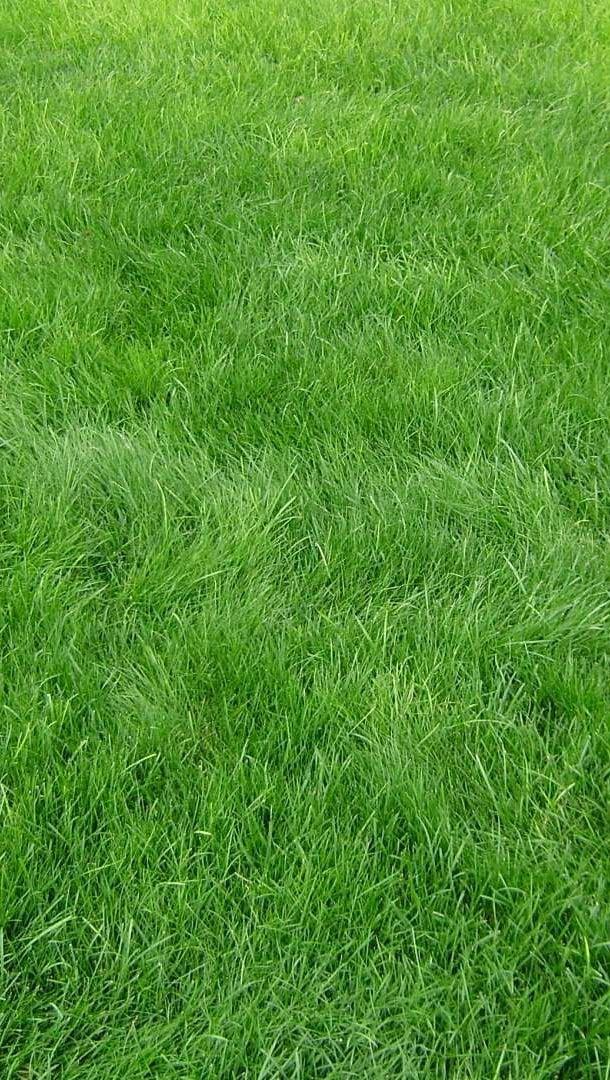 Wallpaper Grass texture Vertical