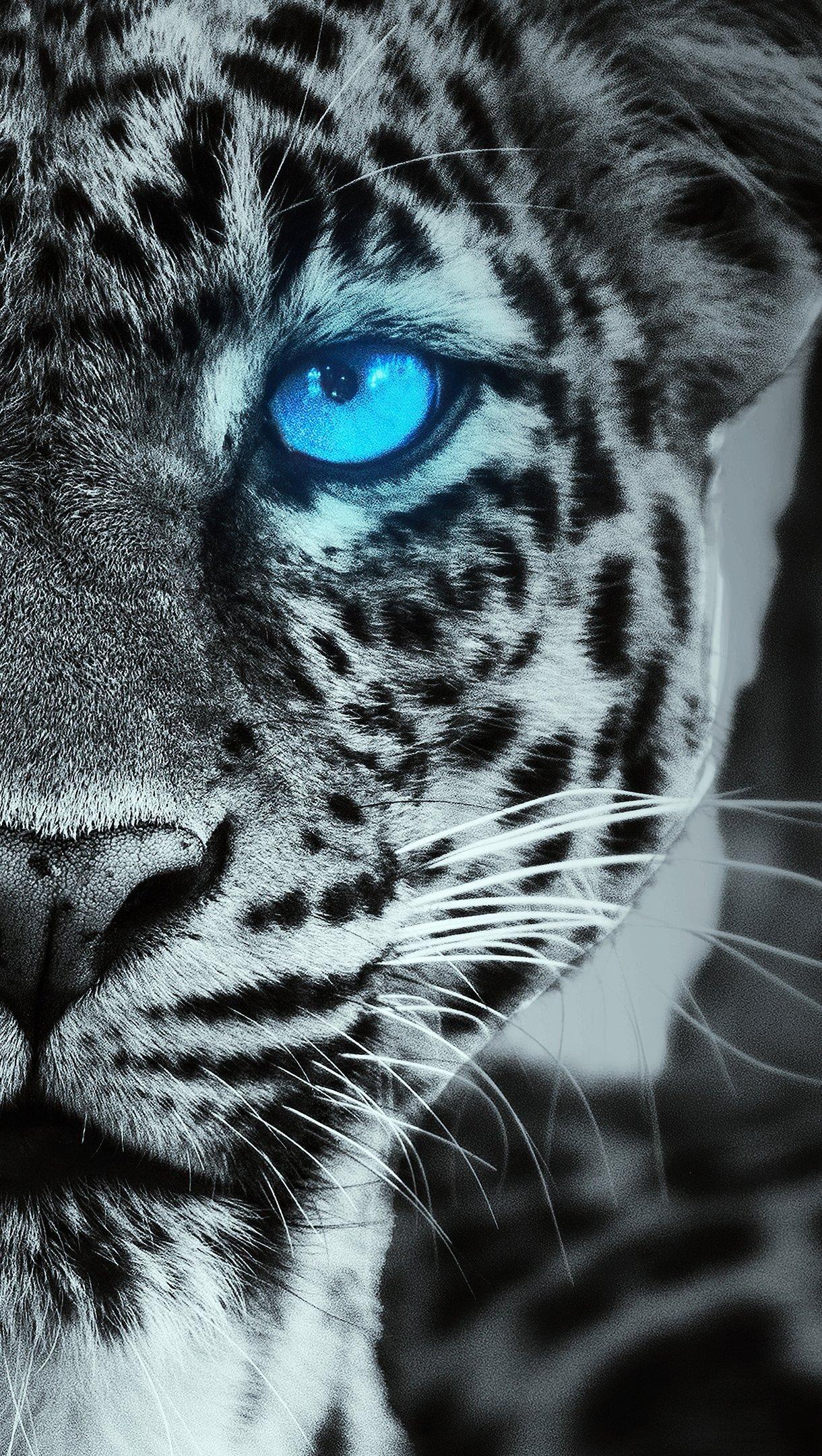 Fondos de pantalla Tigre con ojos azules brillando Vertical