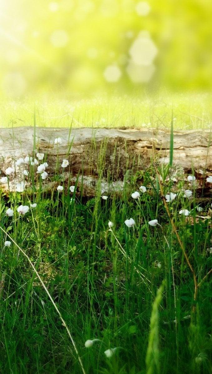 Wallpaper A meadow in summer Vertical