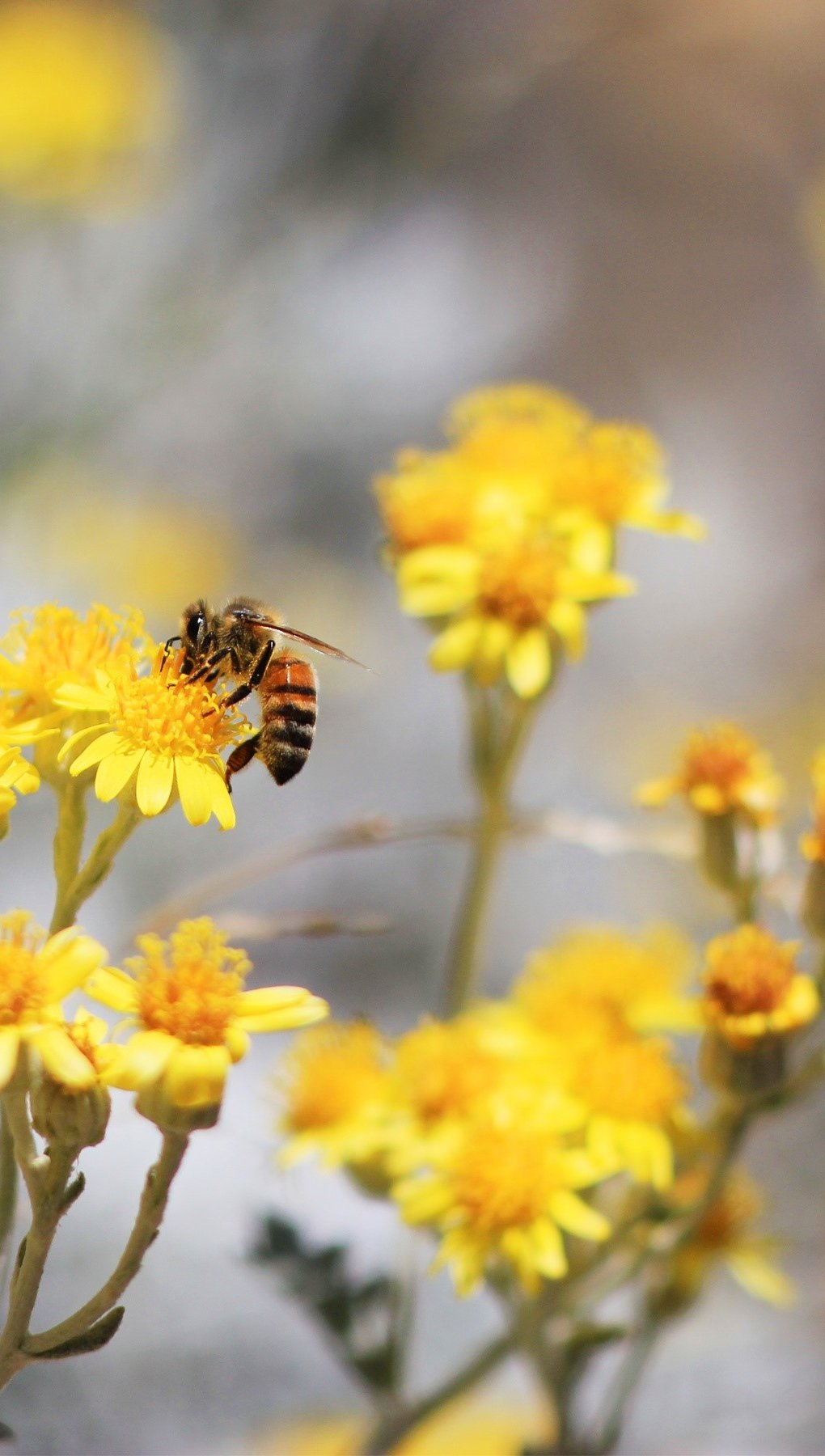 Fondos de pantalla Una abeja en un jardín Vertical