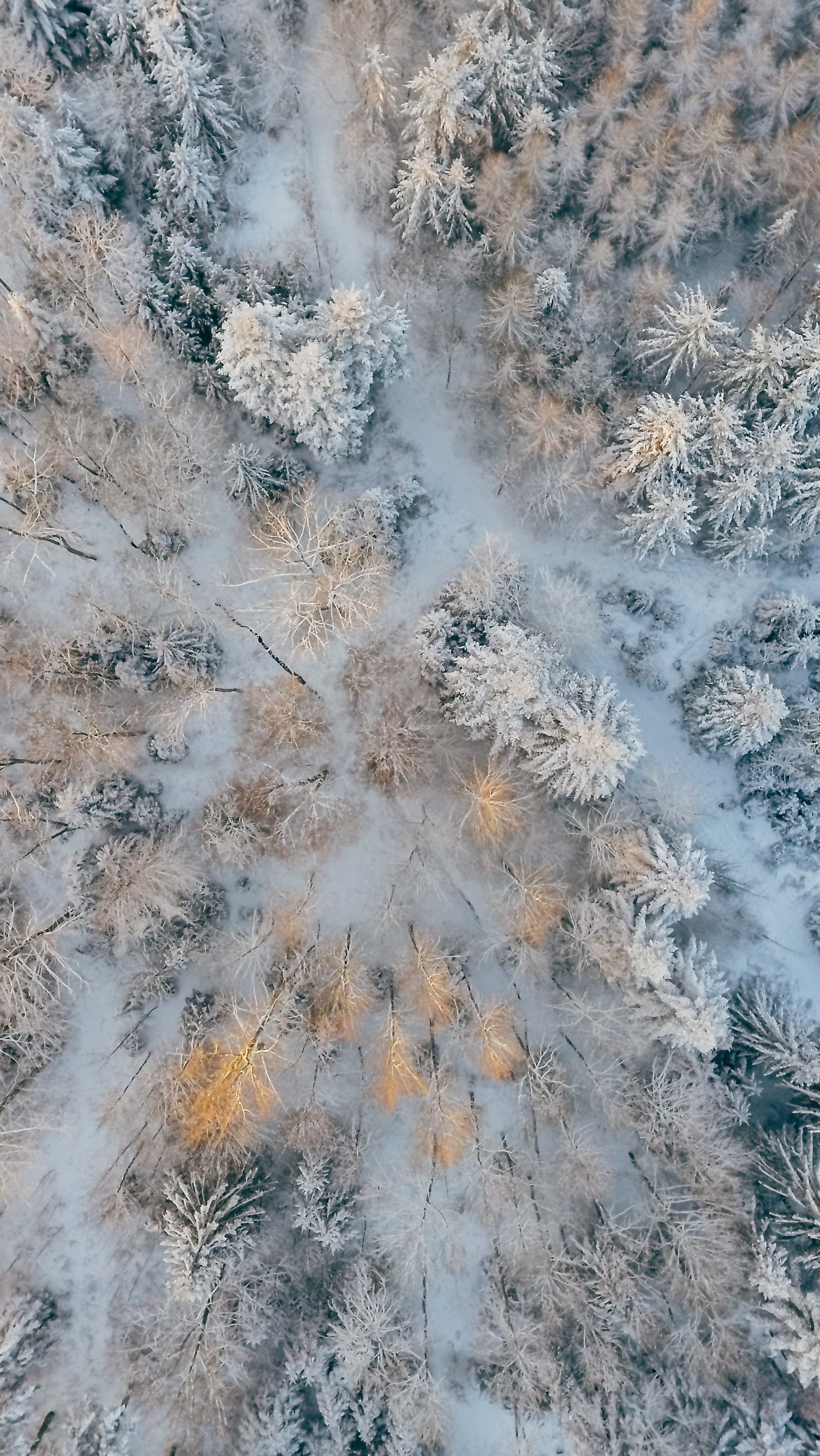 Wallpaper Aerial view of trees with cold forest snow Vertical