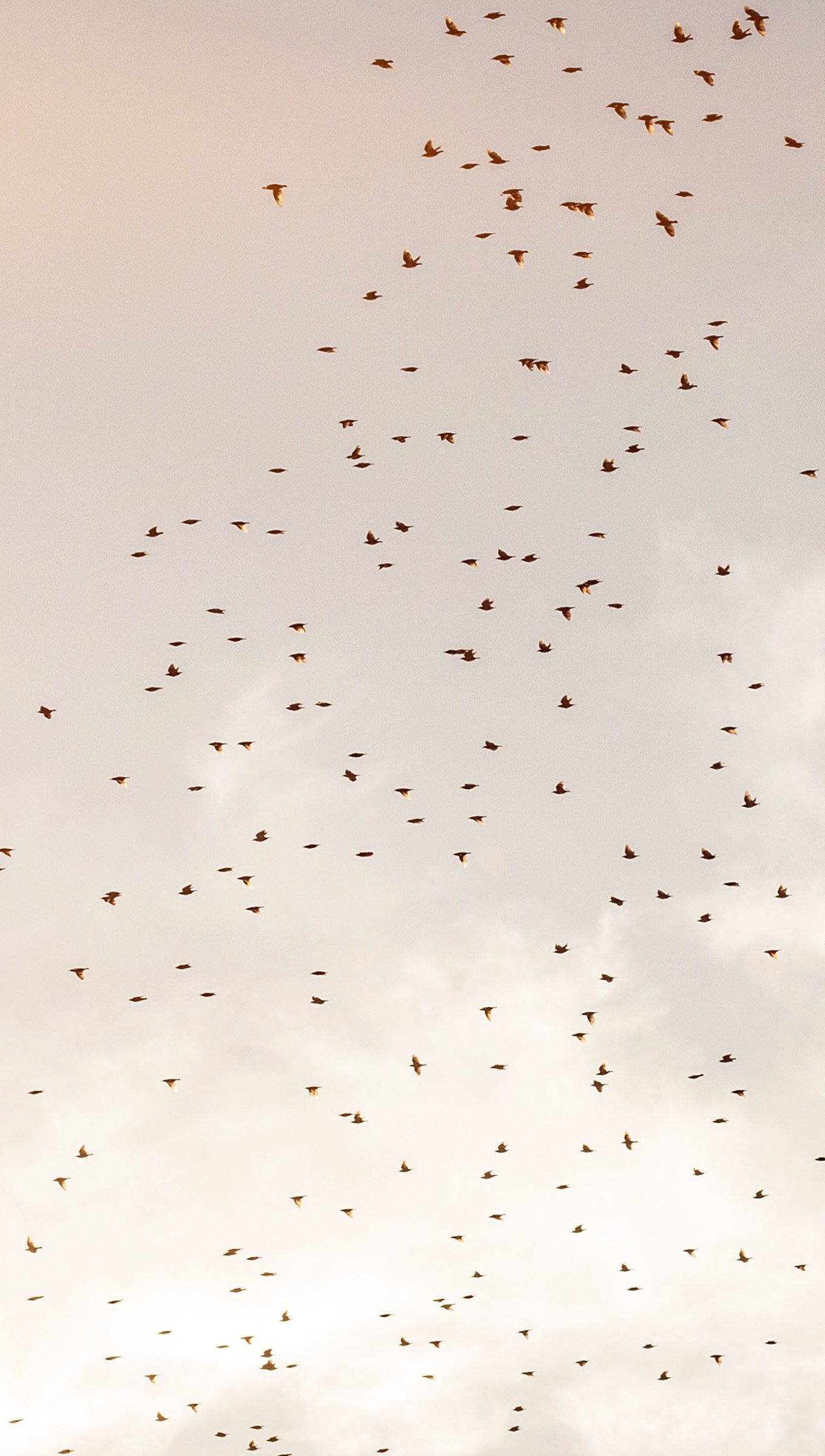 Fondos de pantalla Vuelo de pájaros en el cielo Vertical