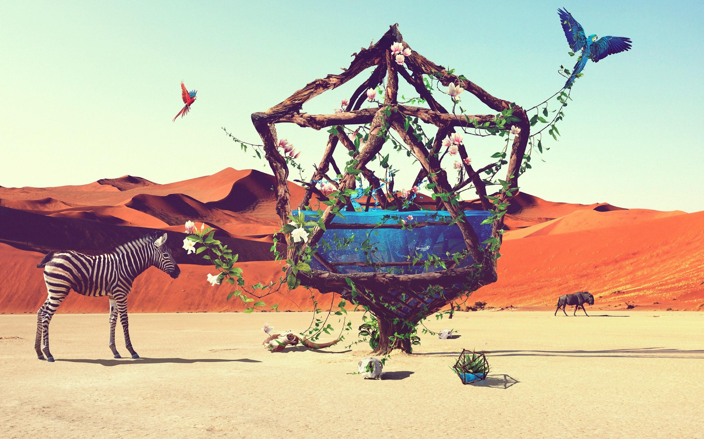Wallpaper Life in the desert