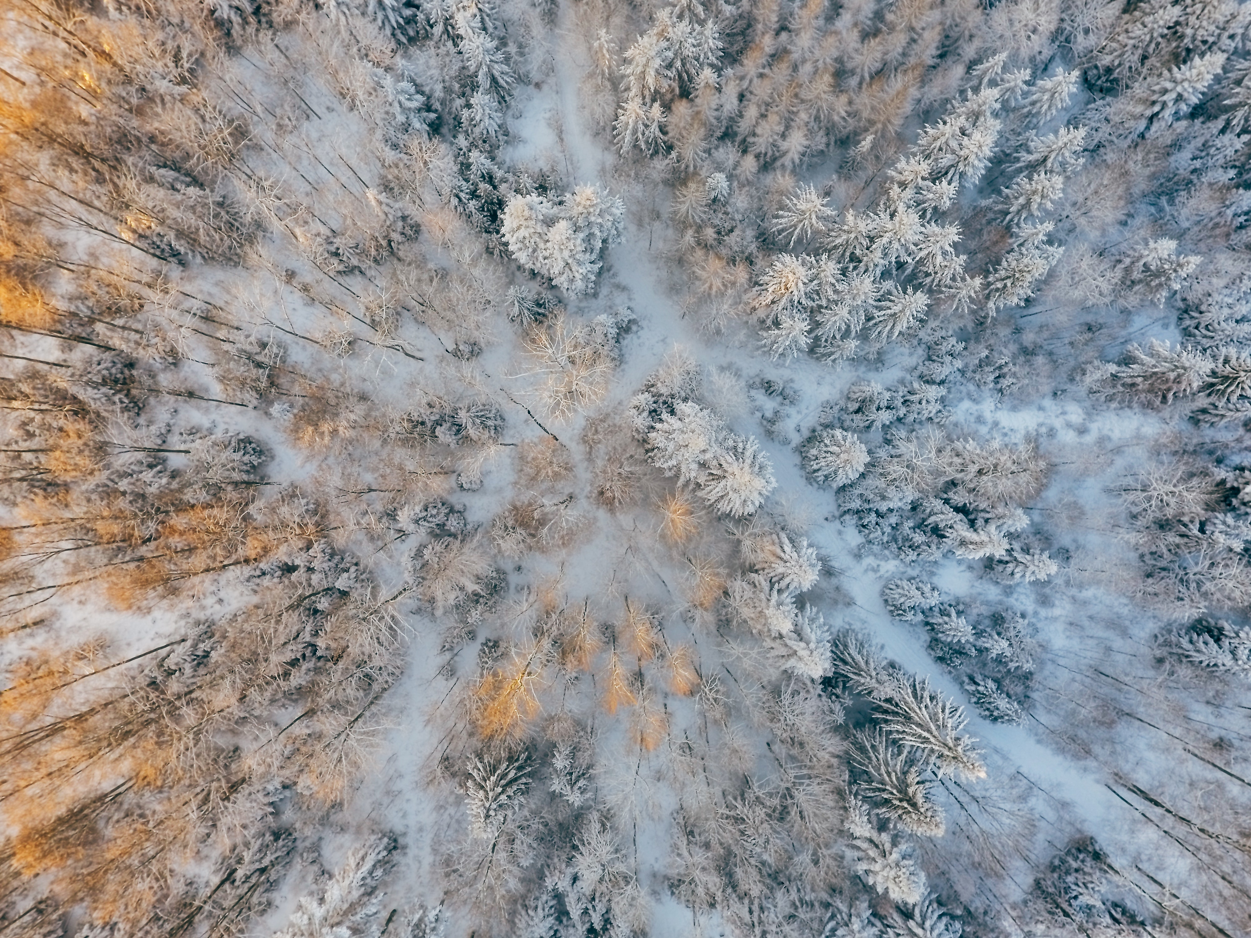 Wallpaper Aerial view of trees with cold forest snow