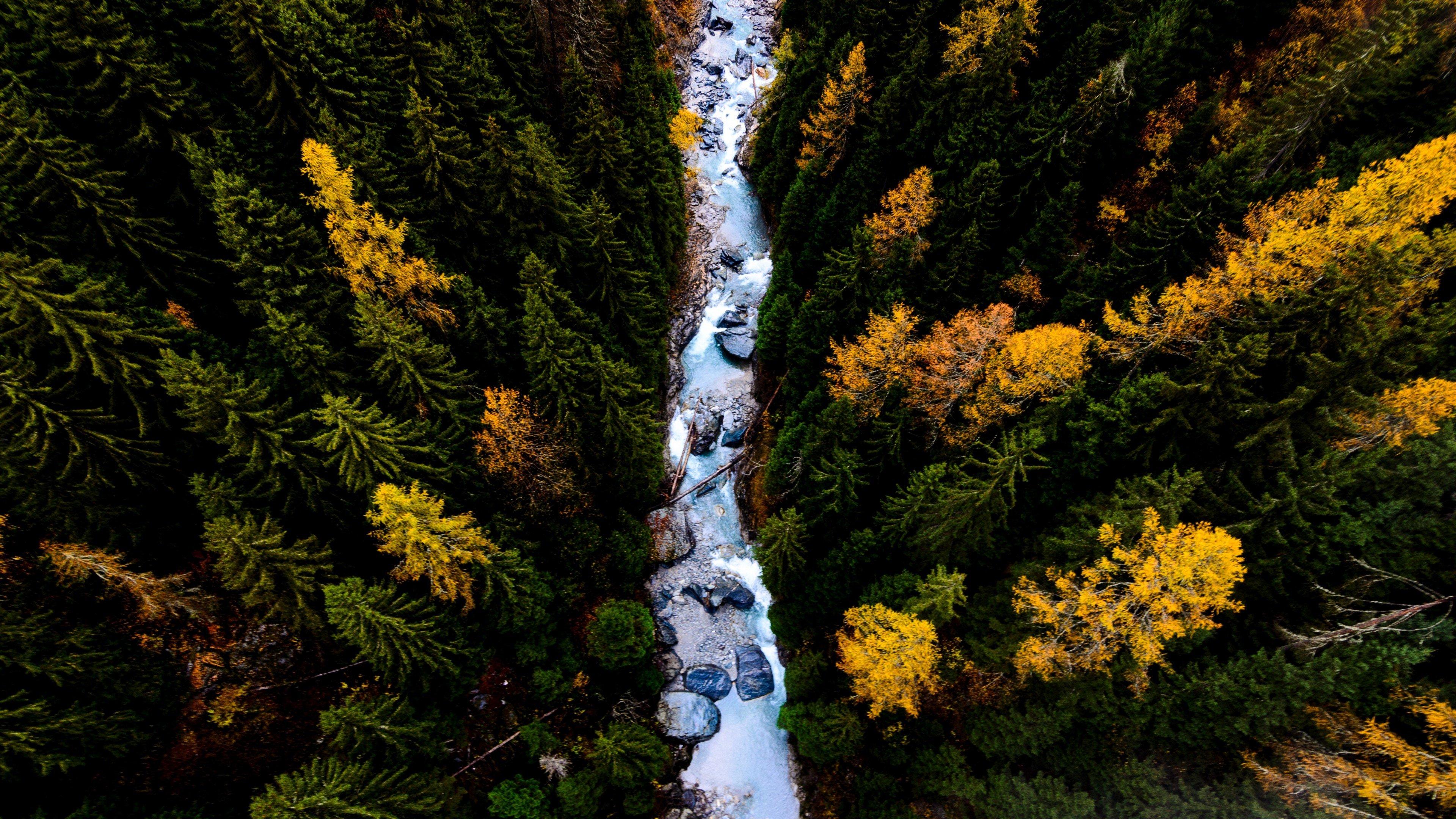 Fondos de pantalla Vista aérea de pinos en el bosque