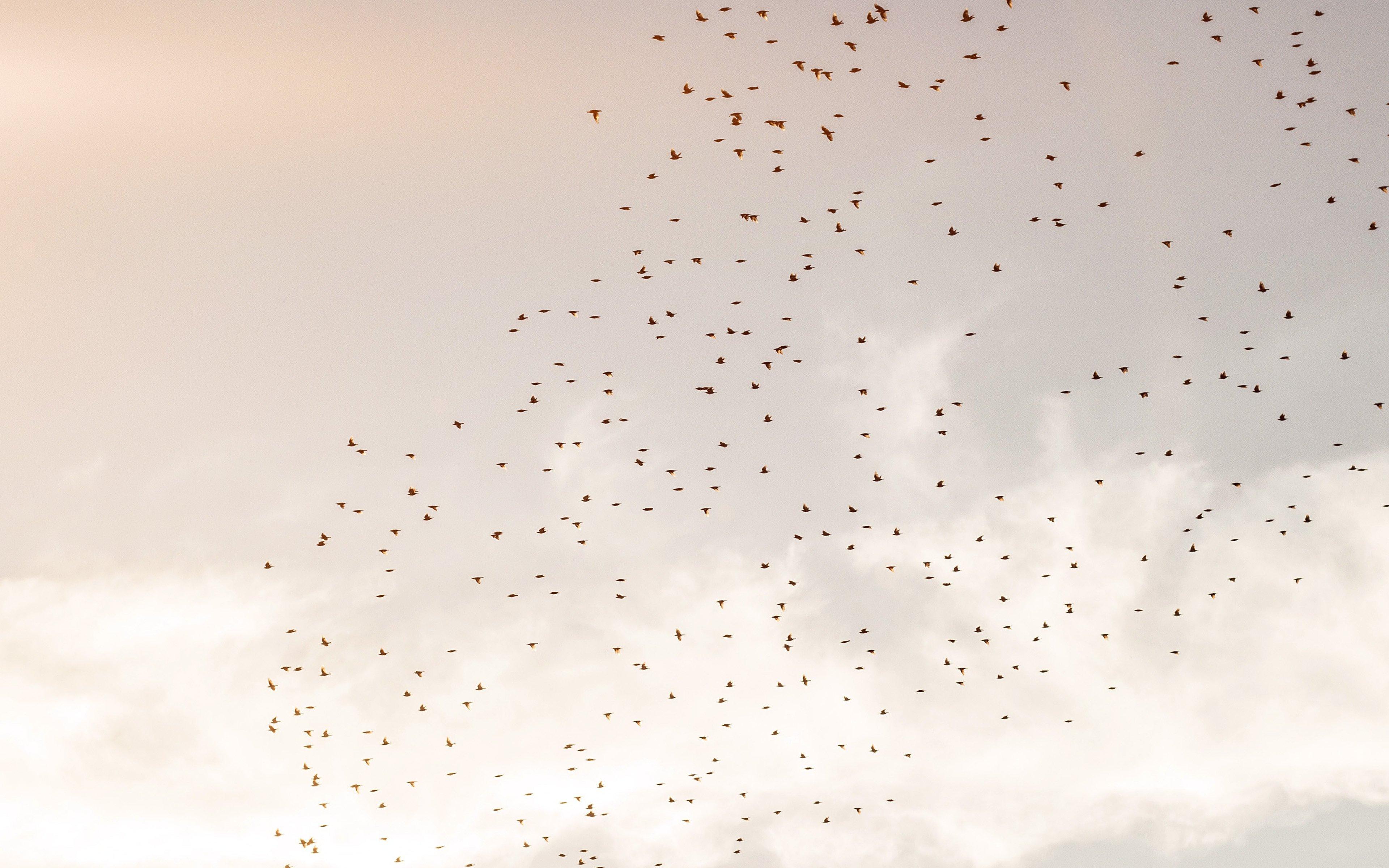 Fondos de pantalla Vuelo de pájaros en el cielo